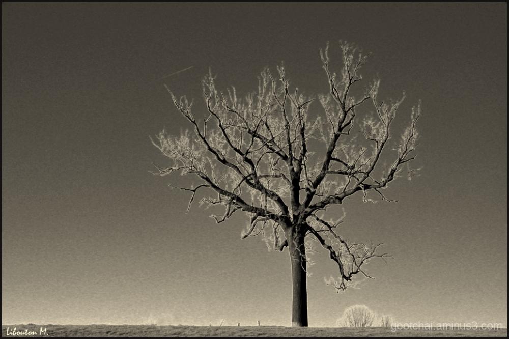Dans le silence de la terre..