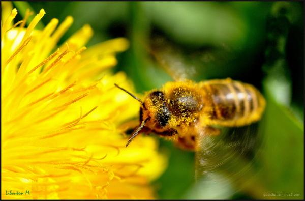 Maya l'abeille!!