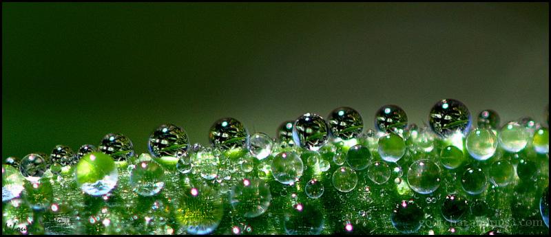 Boules de Noël sur herbe!