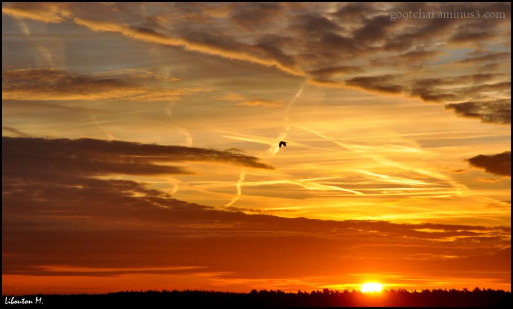 Vol au soleil levant.