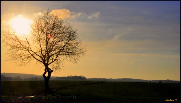 Il faut aimer la solitude....