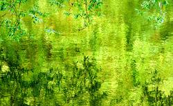 Chlorophylle.