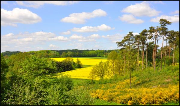 Voir la vie en jaune.....