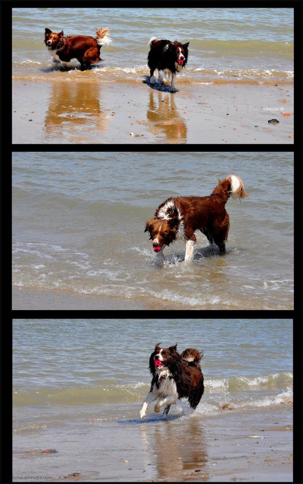 Les zouzous à la mer!!