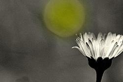 Caressée par la lune....