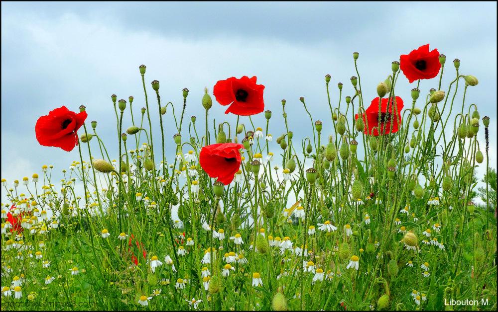 Les belles des champs....