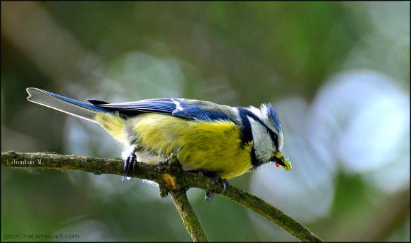 Un seul oiseau en cage , la liberté est en deuil.