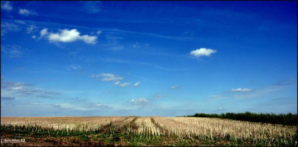 La terre se nourrit d'empreintes,....