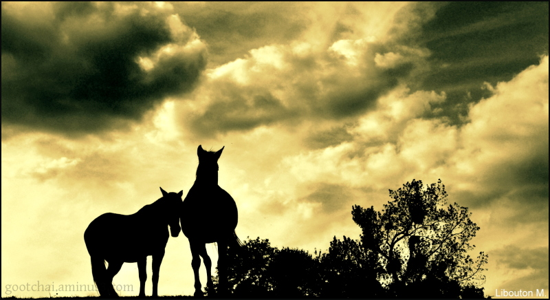 Le cheval est un cadeau de Dieu à l'homme.