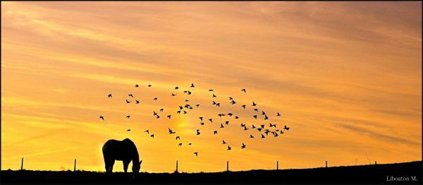 La pensée a des ailes......