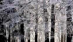 La forêt est un état d'âme.