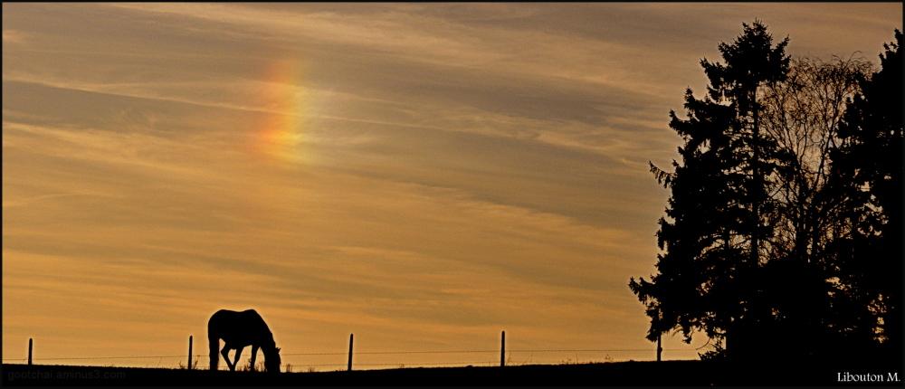 Le cheval et le chien du soleil...