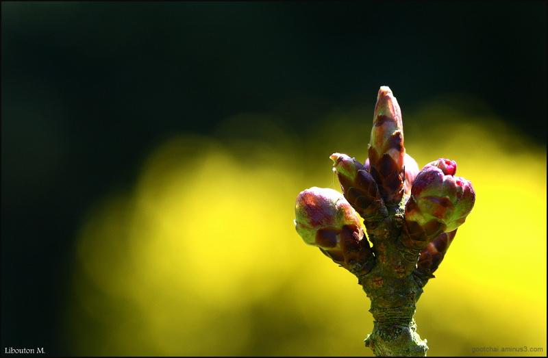 Naissance d'une fleur...
