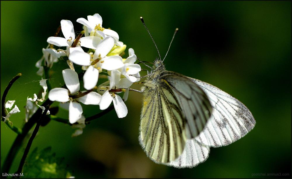 Papillon,ce billet doux plié cherche une adresse..