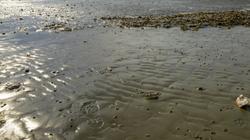 On a marché sur le sable.