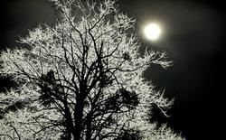 Au clair de lune!