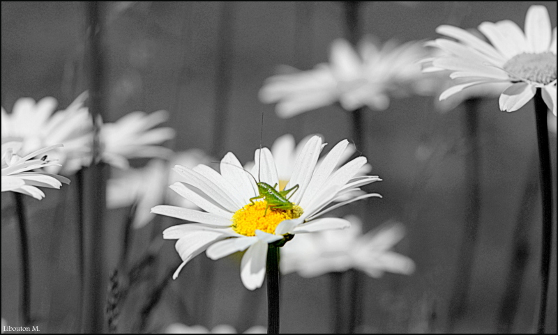 La beauté est la fleur du bonheur.