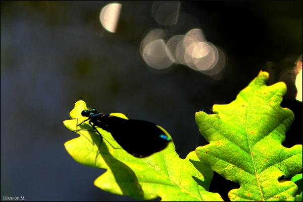 Surfer sur les feuilles