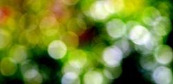 La couleur est la gloire de la lumière.