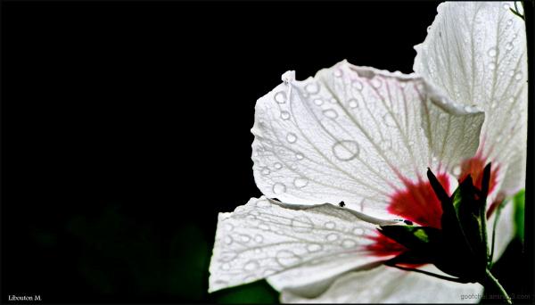 Délicatesse d'un matin pluvieux