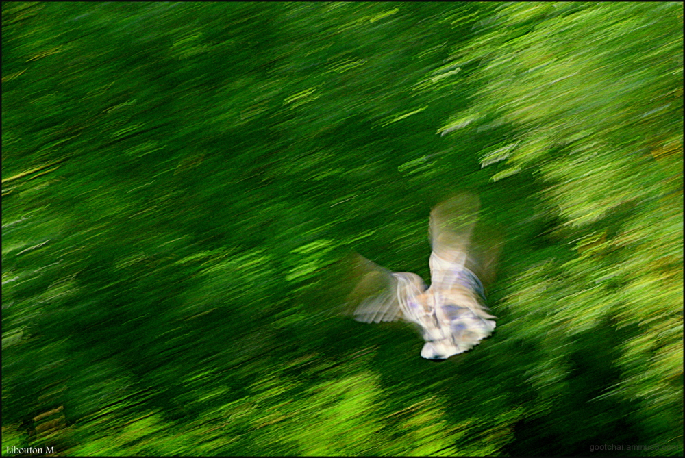 La pensée a des ailes On ne peut arrêter son envol