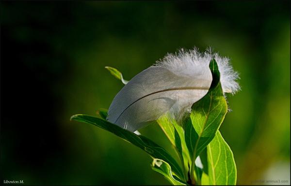 La plume est la langue de l'âme.