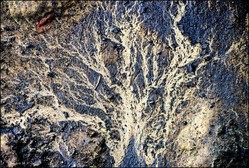 L'arbre fossilisé