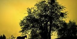 Chaque arbre est le symbole vivant de la paix..