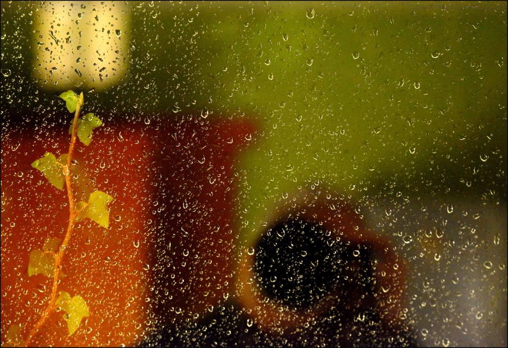 Le lierre et la fenêtre