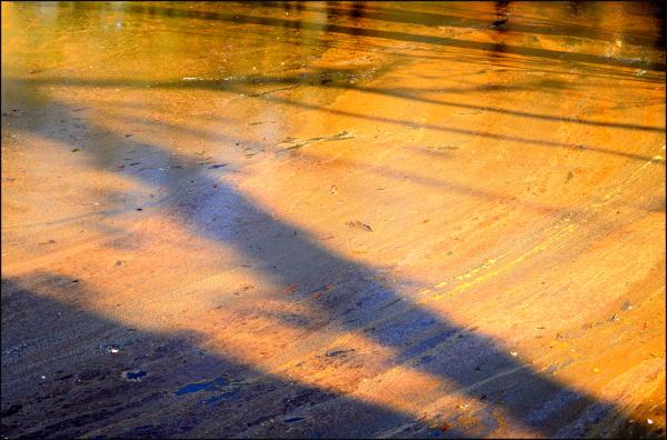 Les ombres du marais
