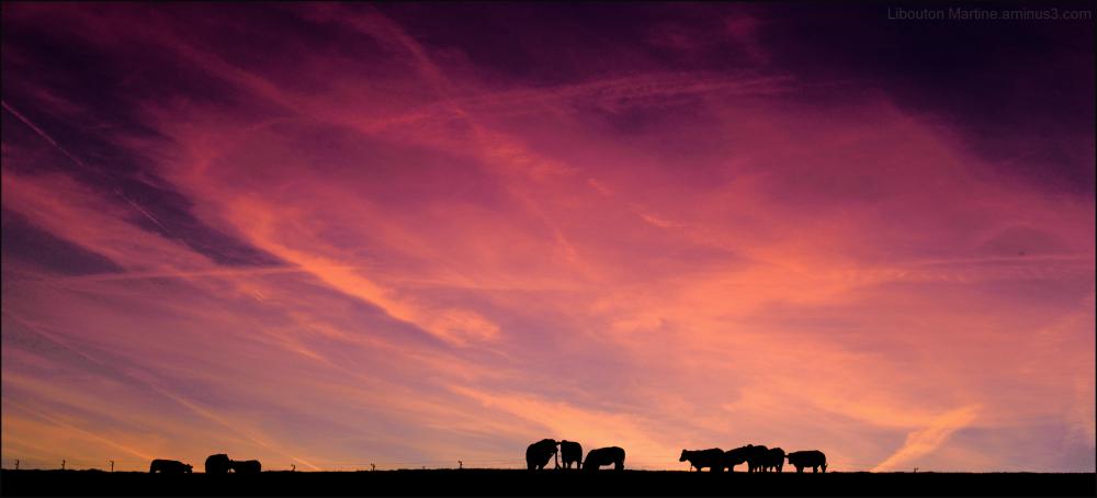 La vache .....