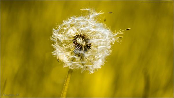 Caressé par le vent