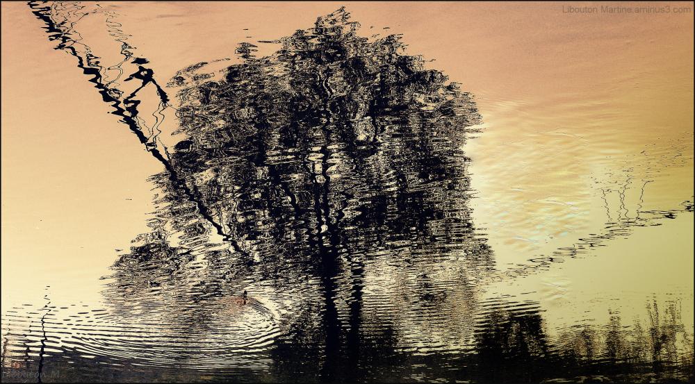 L'Arbre enchaîné ....la 1000 ème photo