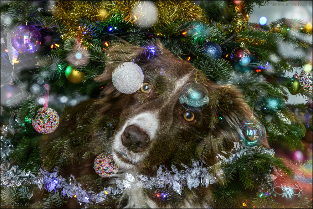 Merry Christmas , Joyeux Noël