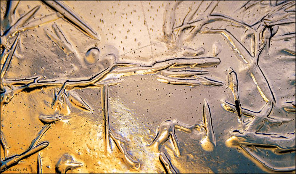 Fossile de glace