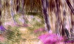 Entrez dans la forêt de mon imaginaire....