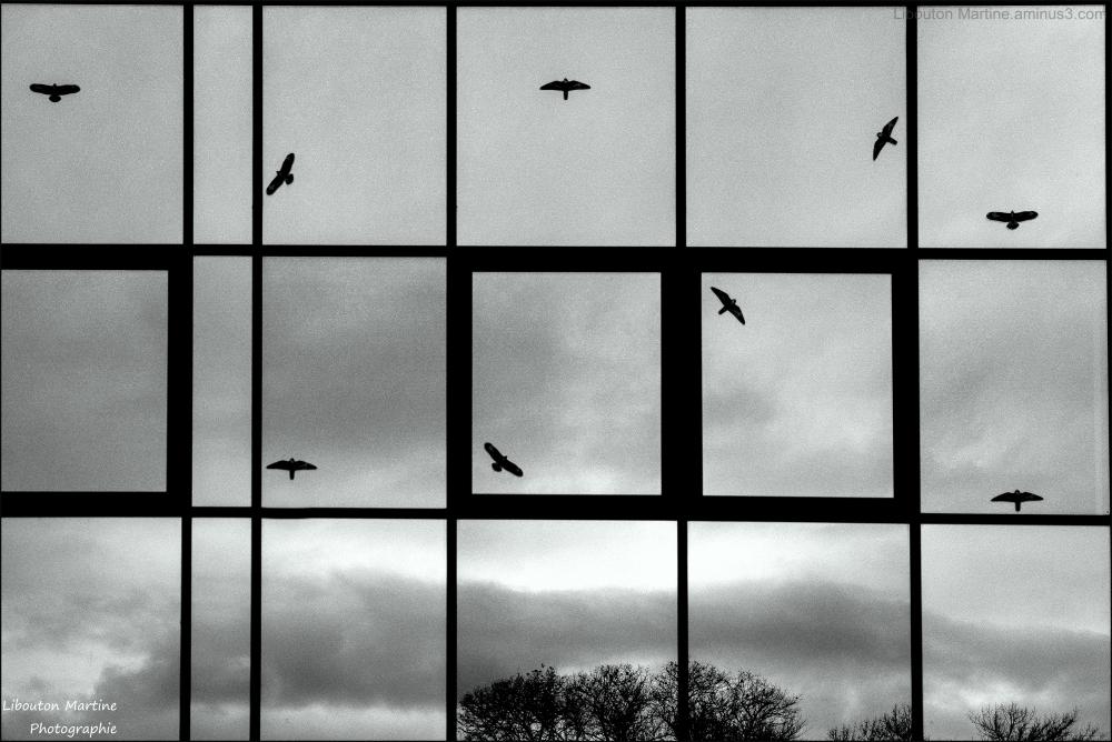 Oiseaux volent