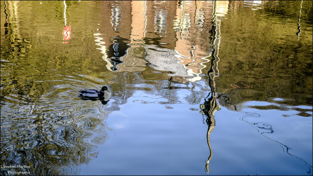 Le canard solitaire