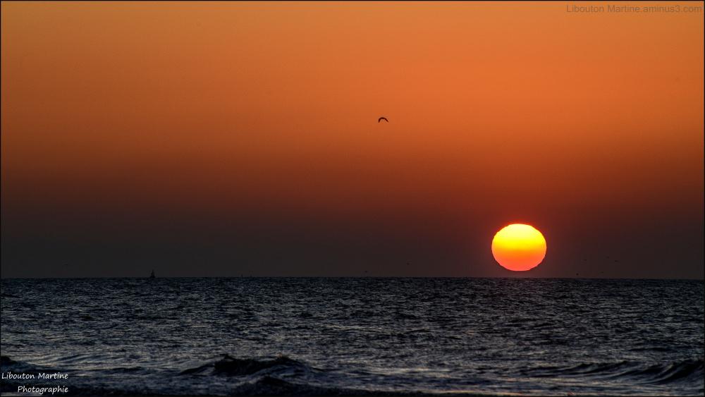 Le soleil, le bâteau, l'oiseau et la mer
