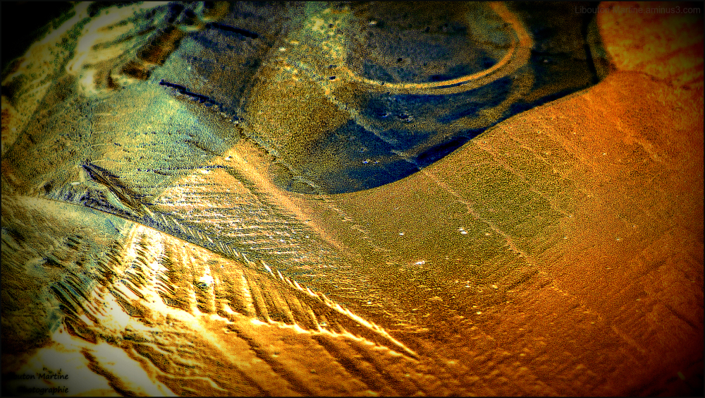 La plume fossilisée