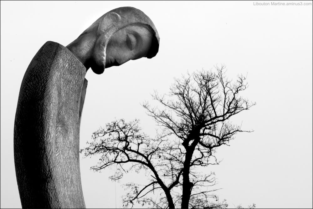Le missionnaire et l'arbre