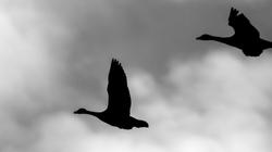 La pensée a des ailes ...