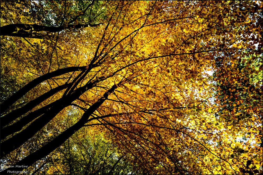 L'automne  avec ces magnifiques couleurs
