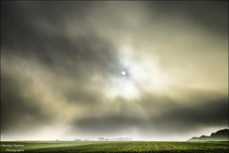 Quand le brouillard inonde la plaine