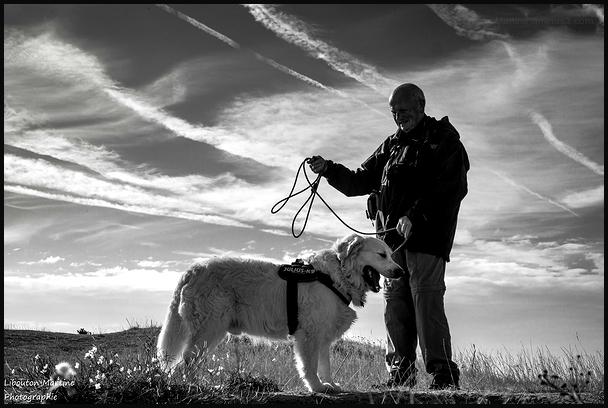 Le chien: le meilleur ami de l'homme