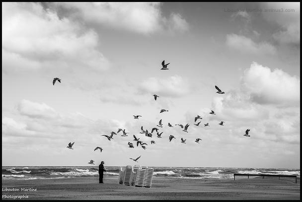 L'homme aux oiseaux