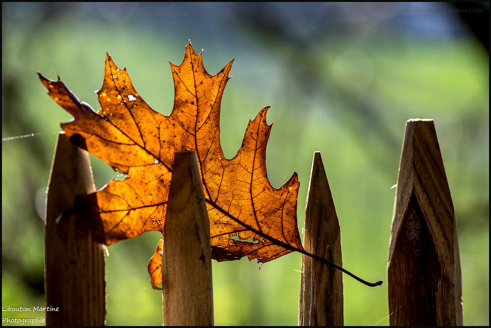 Une rescapée de l'automne !