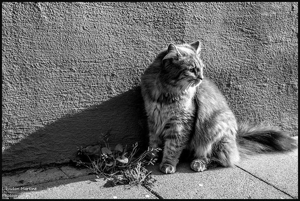 L'idéal du calme est dans un chat assis.