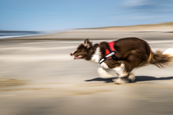 Gootchaï : Speedy Gonzales !!!