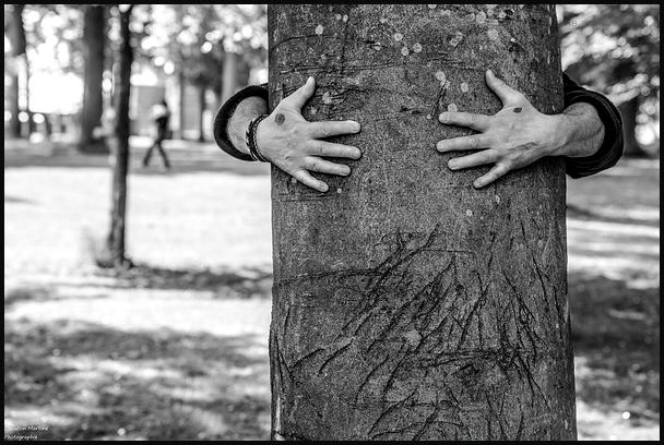 Écouter comme un arbre vaut mieux que tout.